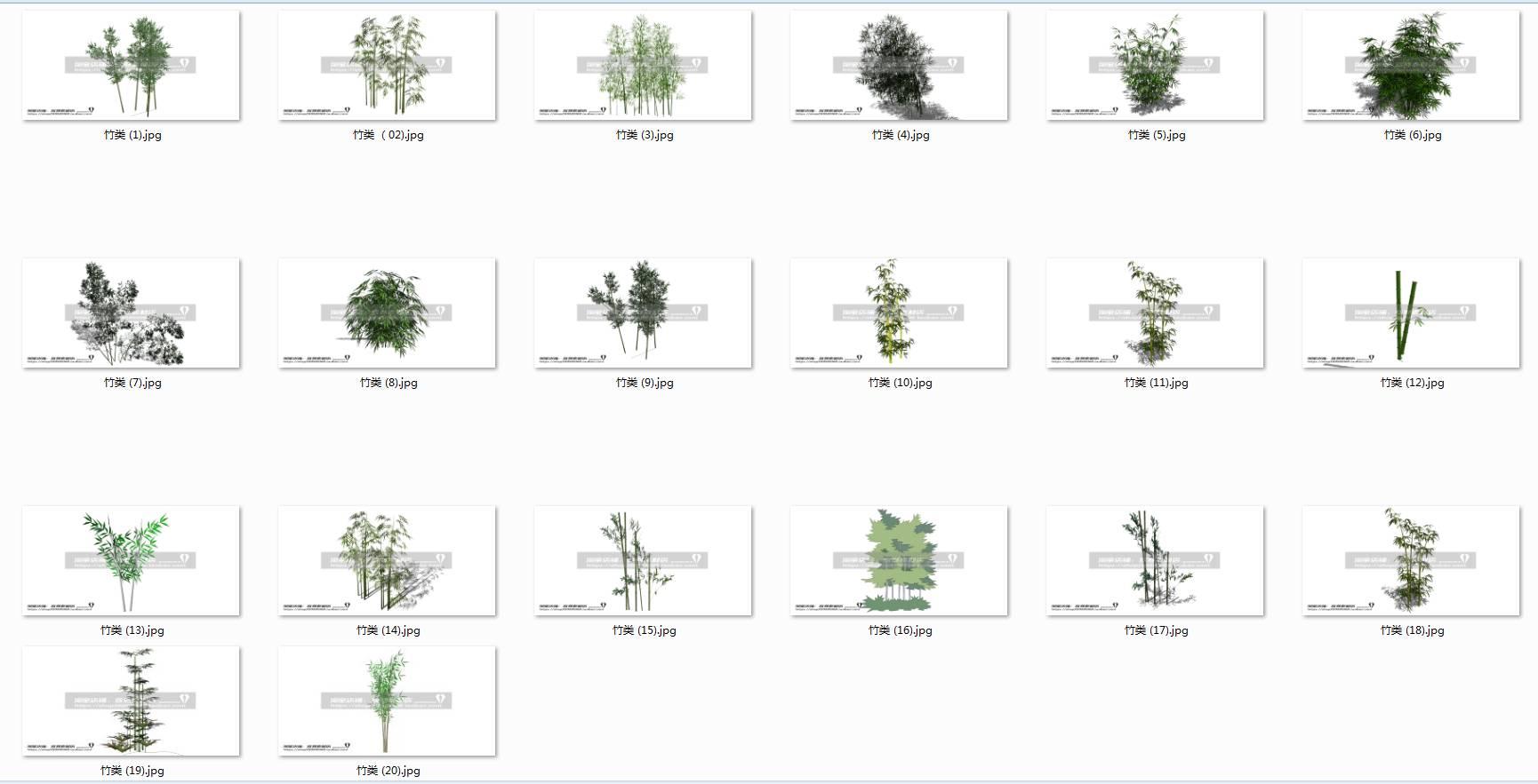 园林植物 竹子(20个)